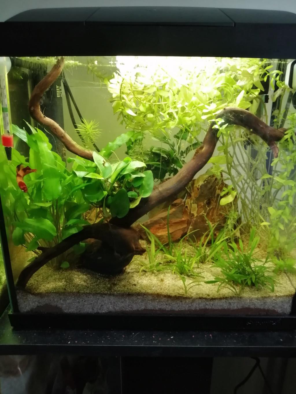 Présentation de mon aquarium 25 litres - Page 2 Img_2155