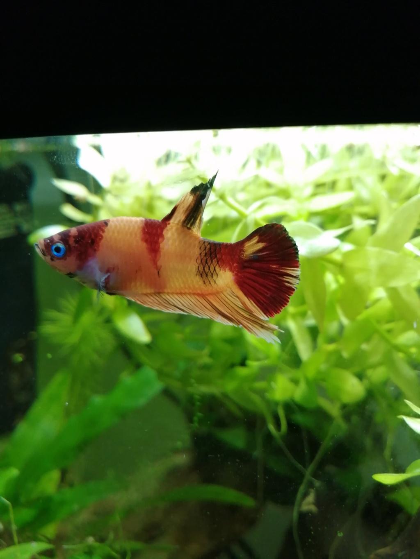 Présentation de mon aquarium 25 litres - Page 2 Img_2156