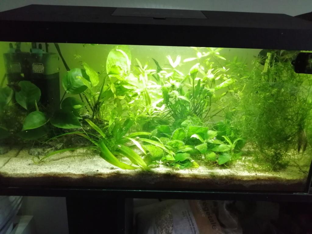 Présentation de mon aquarium 54 litres Img_2160