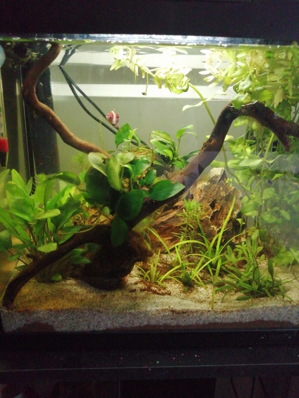Présentation de mon aquarium 25 litres - Page 2 Img_2189