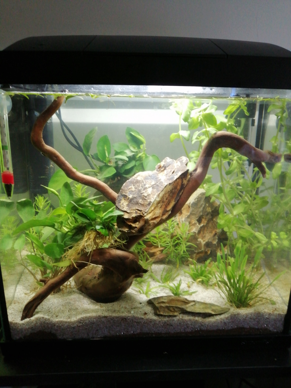 Présentation de mon aquarium 25 litres - Page 2 Img_2190