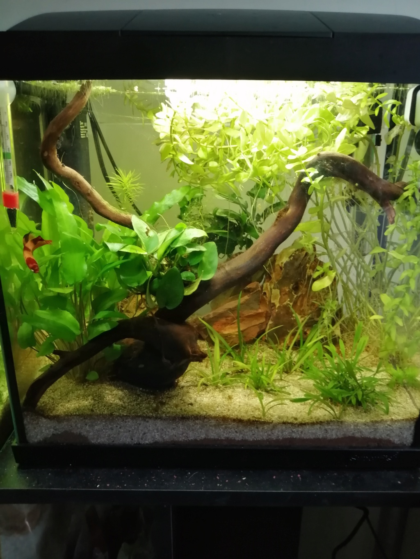 Présentation de mon aquarium 25 litres - Page 2 Img_2191