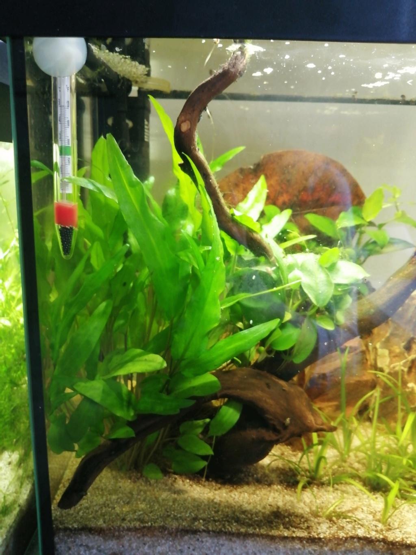 Présentation de mon aquarium 25 litres - Page 2 Img_2192