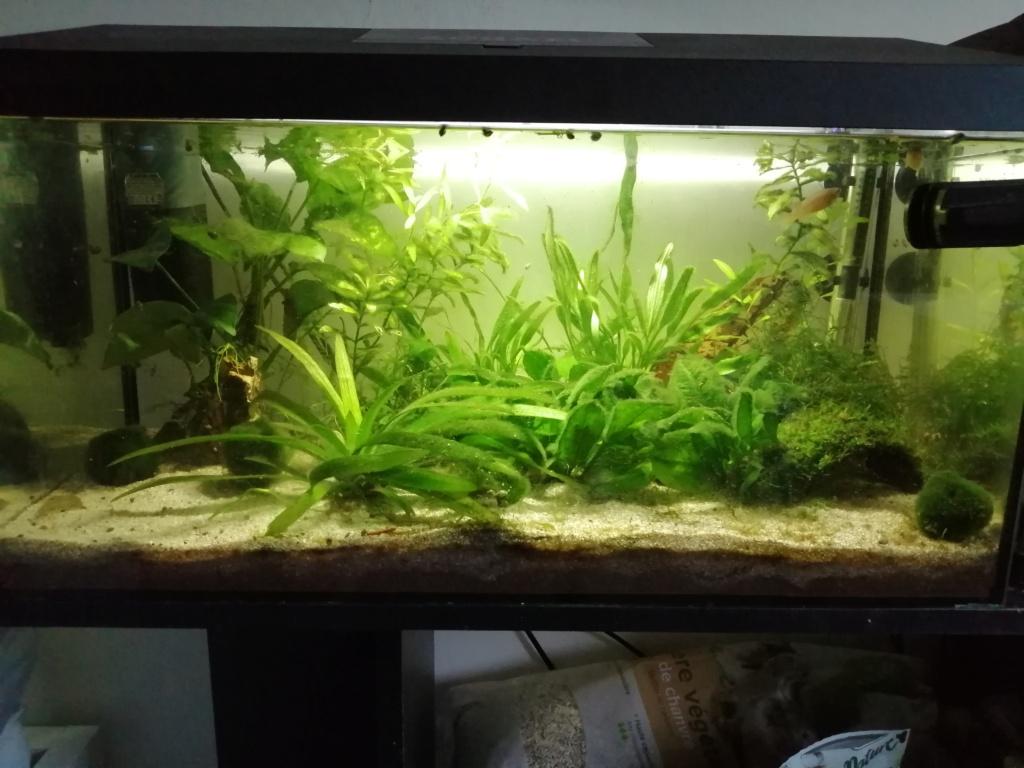 Présentation de mon aquarium 54 litres Img_2196