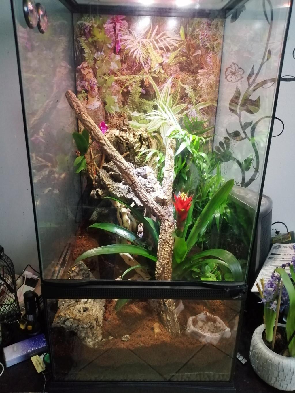 Projet terrarium et suivi d'un gecko  Img_2203