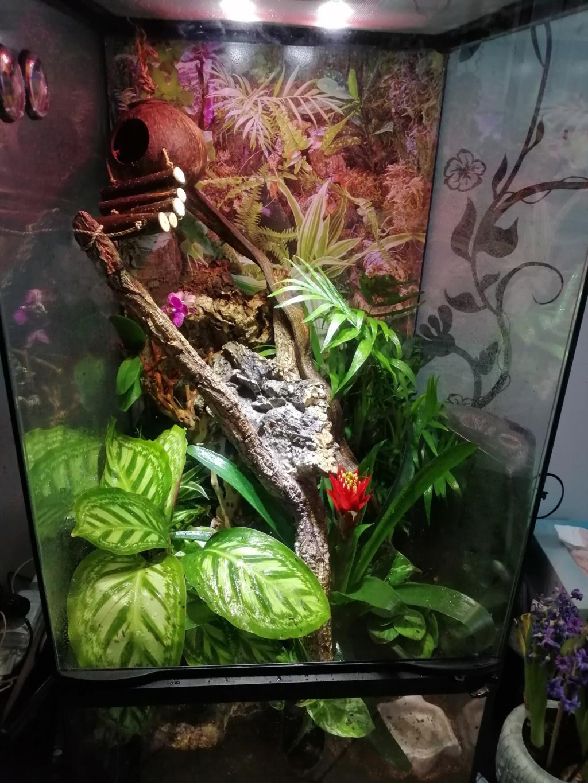 Projet terrarium et suivi d'un gecko  Img_2204