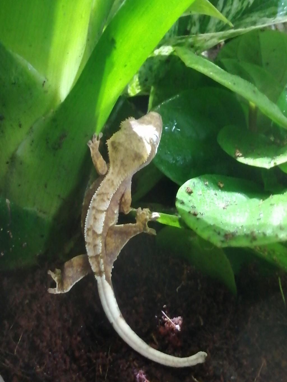 Projet terrarium et suivi d'un gecko  - Page 2 Img_2221