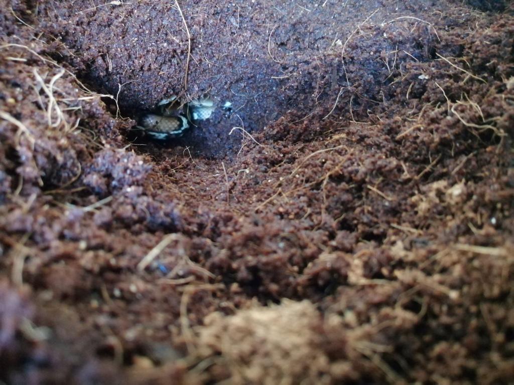 Présentation de mon terrarium et de se qu'il y a dedans  Img_2234