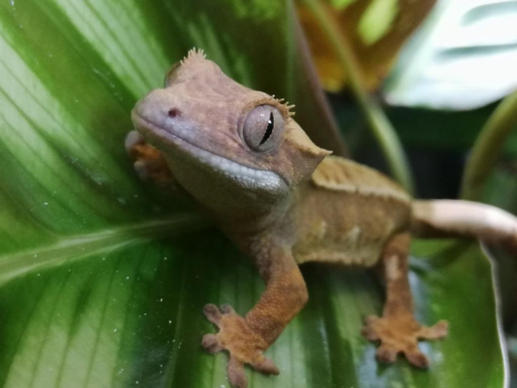 Projet terrarium et suivi d'un gecko  - Page 2 Img_2264
