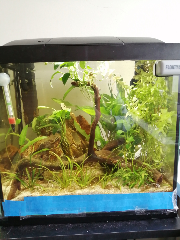 Projet aquarium 30 l  Img_2281