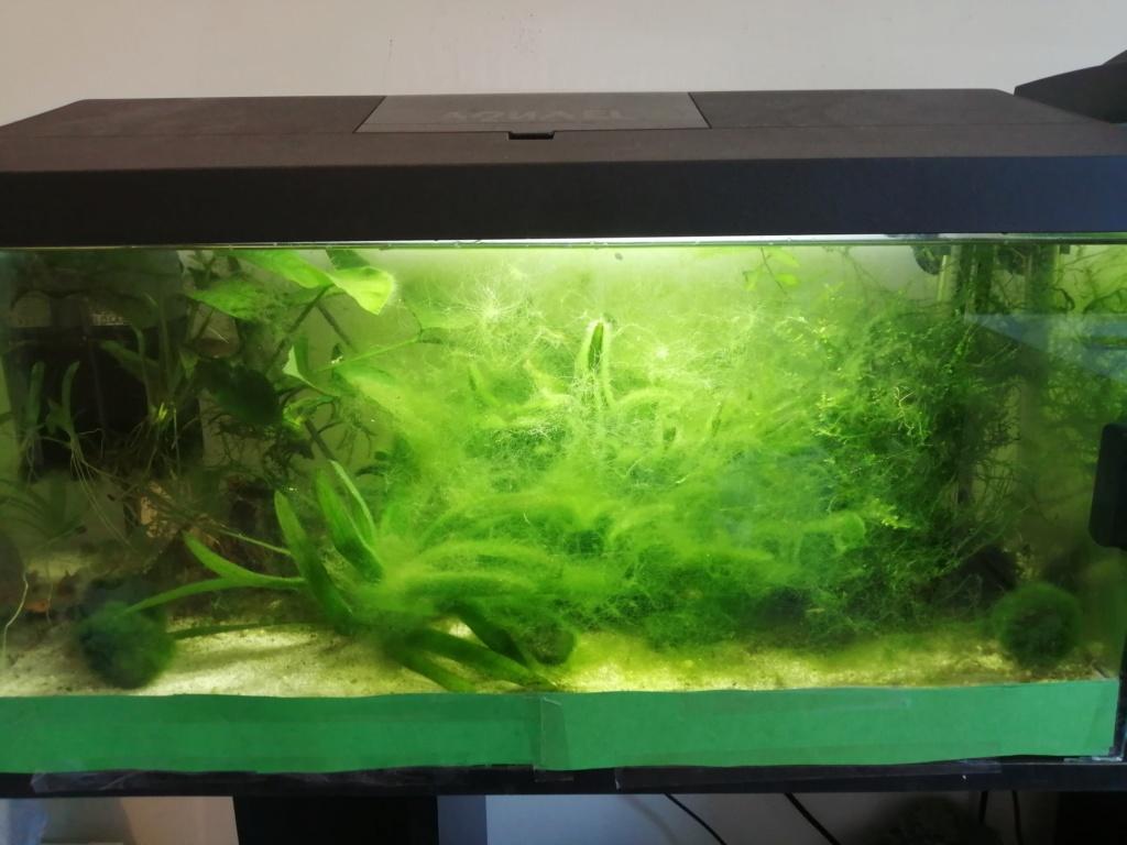 Les aquariums du confinement Img_2288