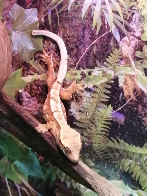 Projet terrarium et suivi d'un gecko  - Page 3 Img_2306