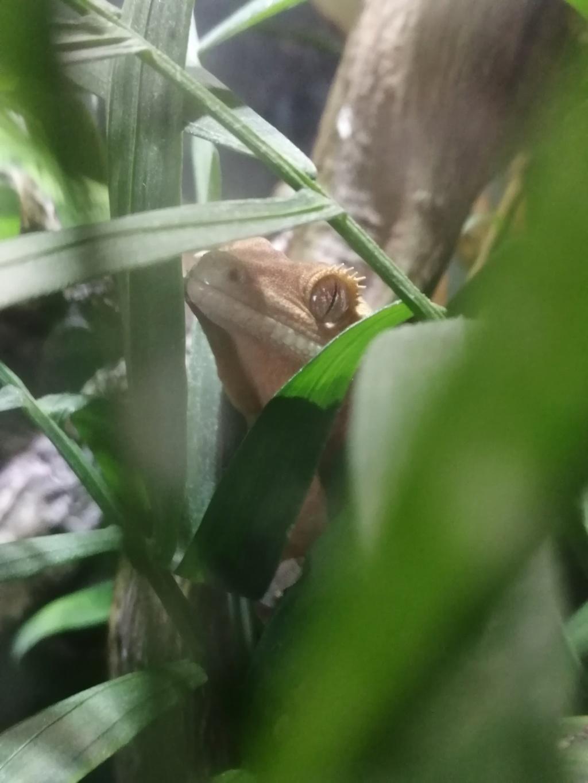 Projet terrarium et suivi d'un gecko  - Page 3 Img_2307