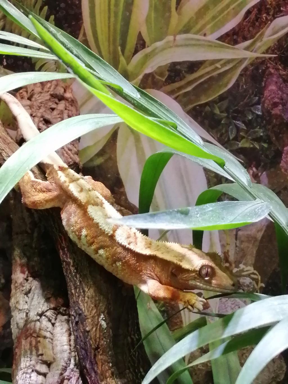 Projet terrarium et suivi d'un gecko  - Page 3 Img_2308