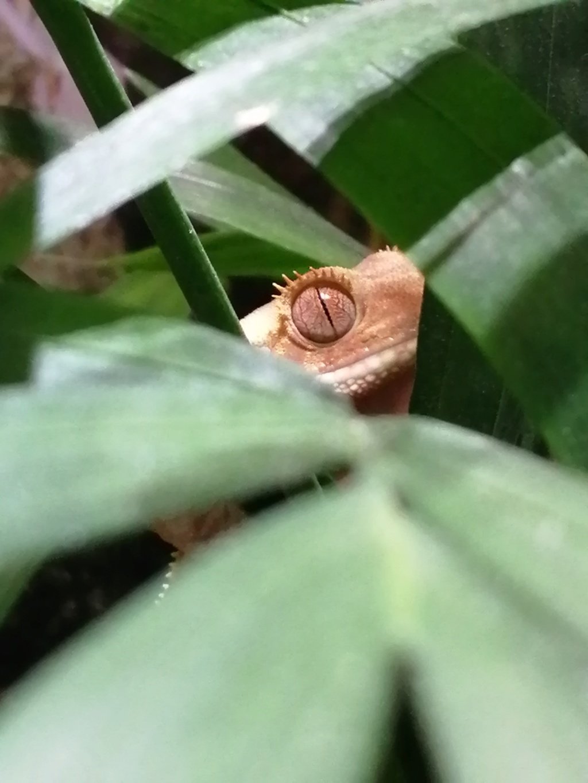Projet terrarium et suivi d'un gecko  - Page 3 Img_2309