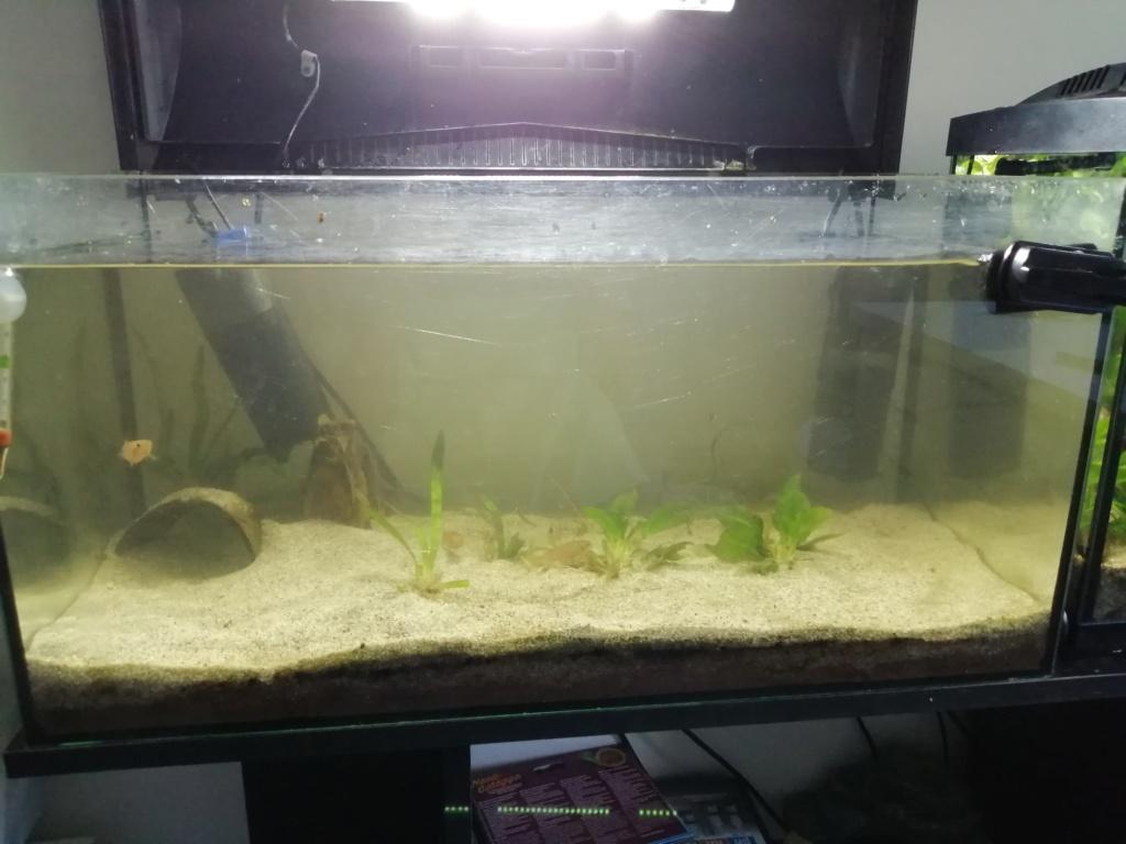 Il y a du changement dans mon aquarium 54 litres  Img_2355