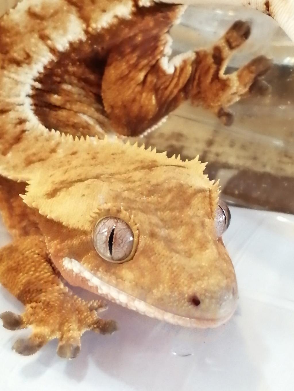 Projet terrarium et suivi d'un gecko  - Page 3 Img_2358
