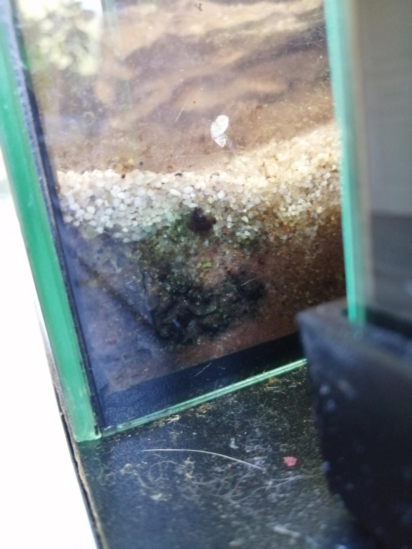 Il y a du changement dans mon aquarium 54 litres  Img_2361