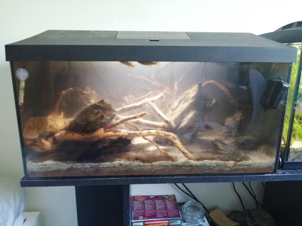 Il y a du changement dans mon aquarium 54 litres  Img_2363
