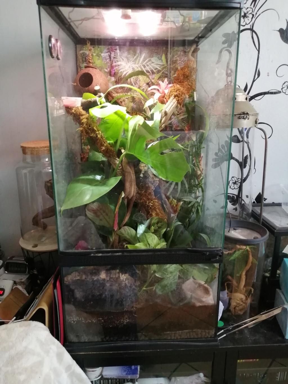 Projet terrarium et suivi d'un gecko  - Page 3 Img_2386