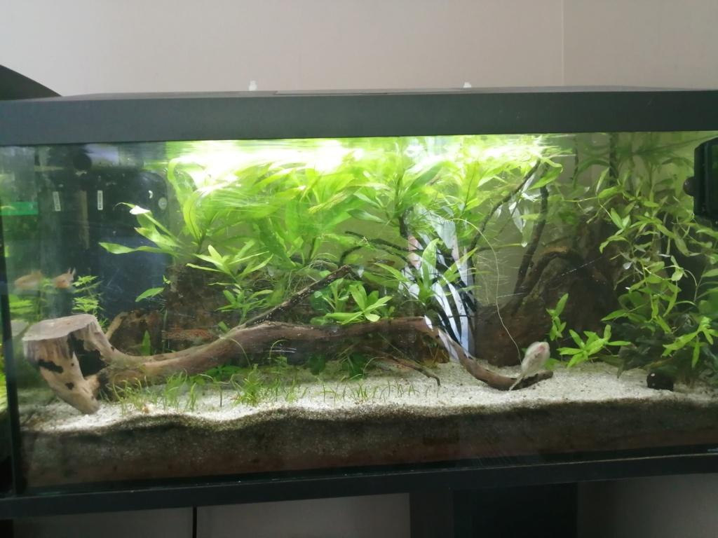 Des nouvelles de mes aquarium  Img_2389