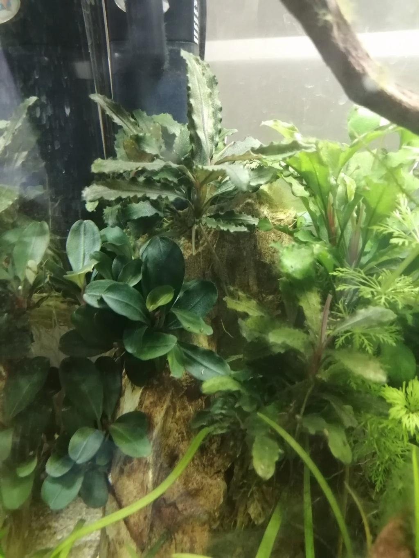 Des nouvelles de mes aquarium  Img_2390
