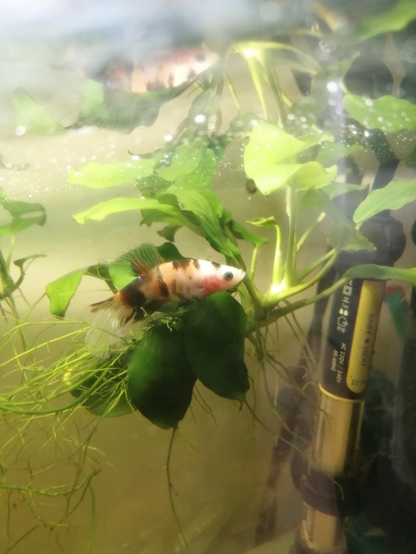 Des nouvelles de mes aquarium  Img_2391