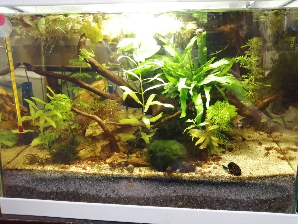 Des nouvelles de mes aquarium  Img_2393
