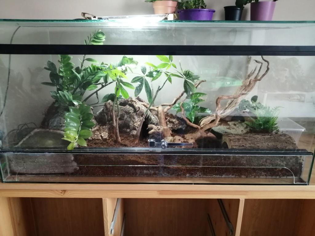 Des nouvelles de mes reptiles  Img_2411