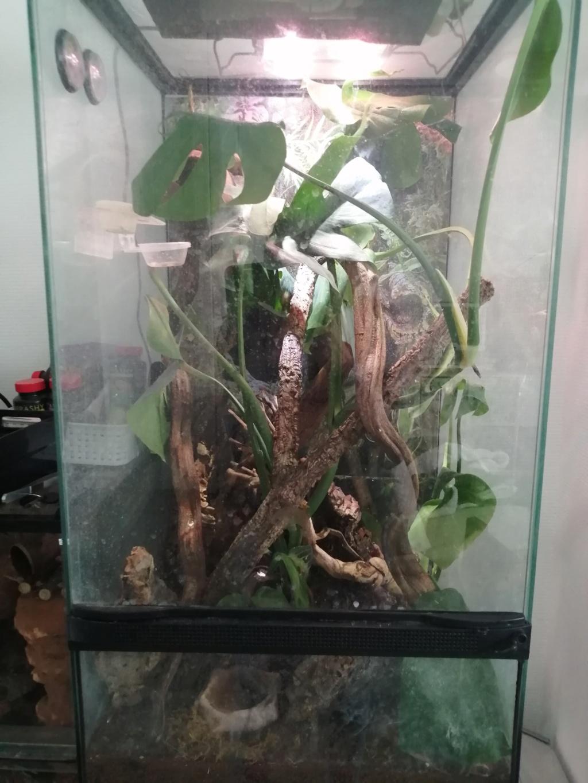 Des nouvelles de mes reptiles  Img_2413