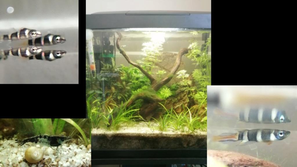 Des nouvelles de mes aquarium  Kmc_2010