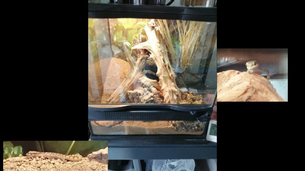 Des nouvelles de mes reptiles  Kmc_2011