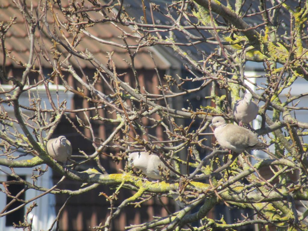 photographie d'oiseaux Regrou10
