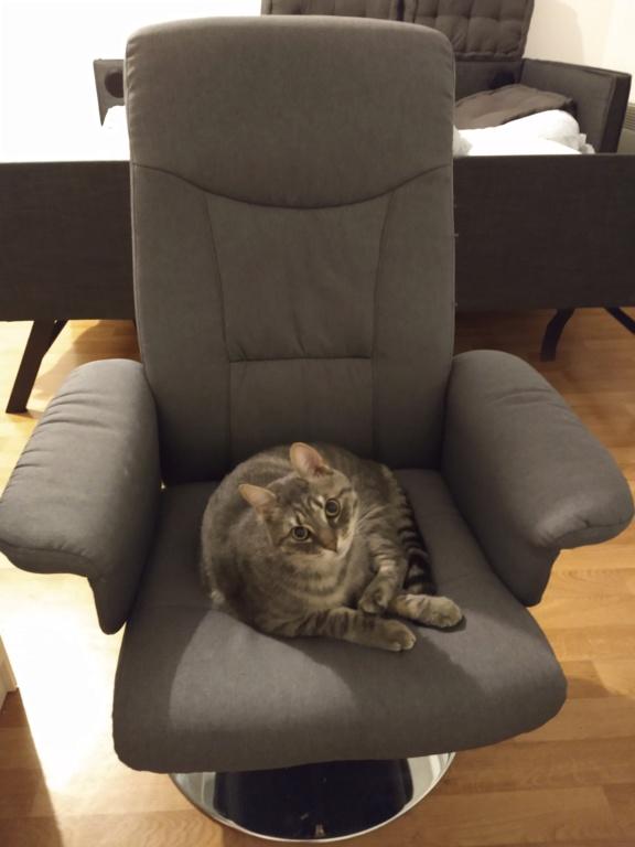 Félix, chat gris tigré, né le 30 juin 2017. Img_2012