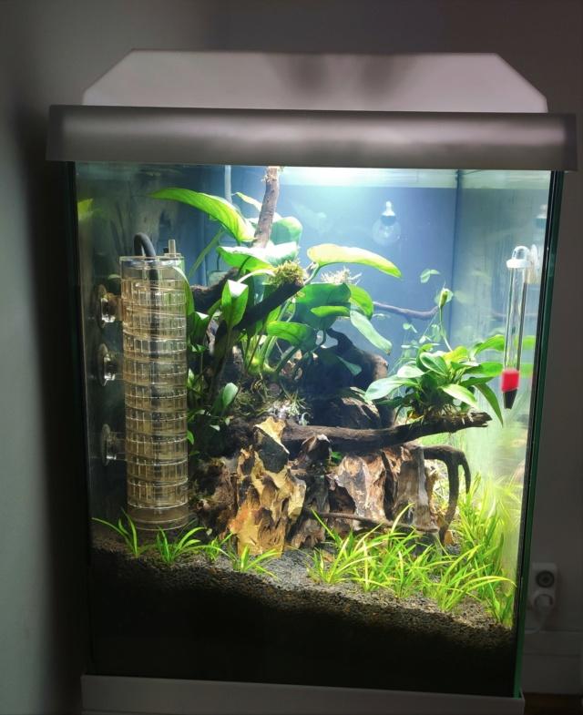 "Démarrage aquarium ""naturea"" 70L Img_2016"