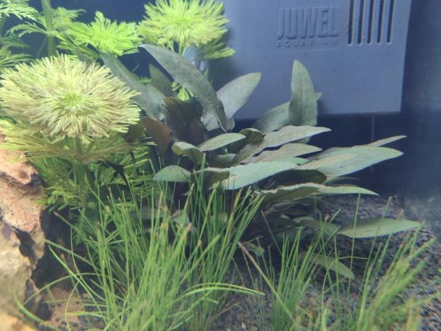 "Démarrage aquarium ""naturea"" 70L Img_2019"