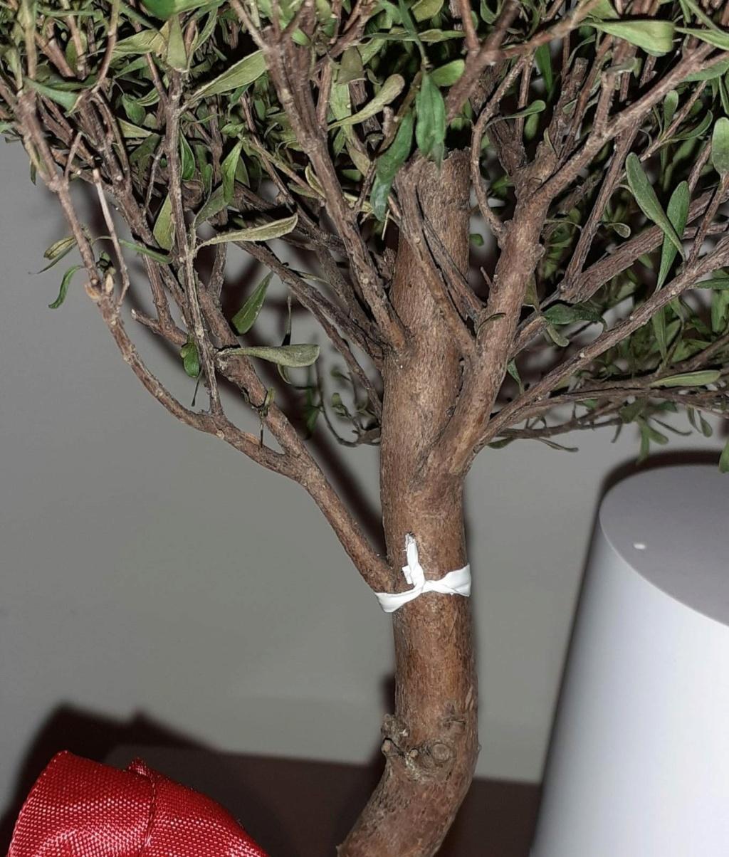 Aiuto! Identificazione e consigli bonsai Whatsa10