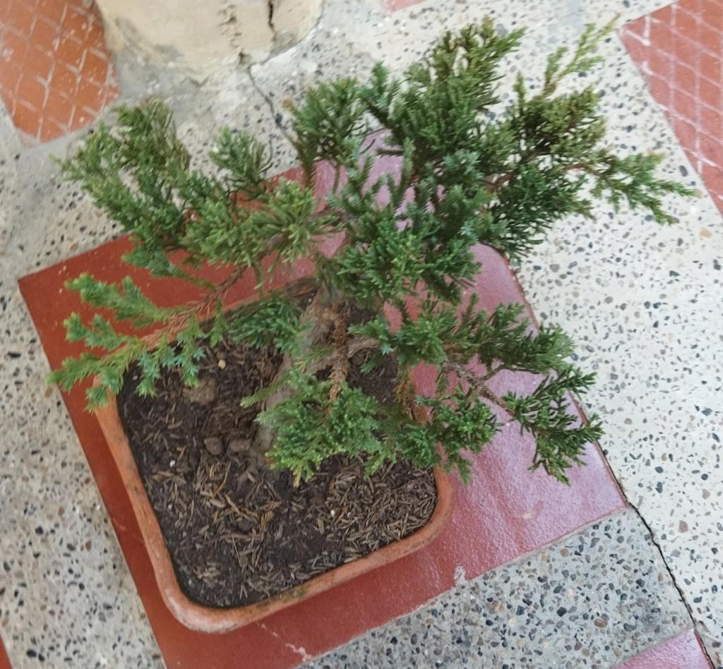 Quien sería tan amable de ayudar a alguien nuevo en este hermoso mundo del bonsai? - Warrod -  Img_2011