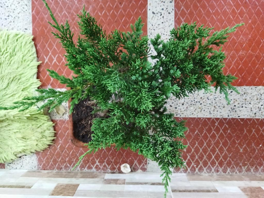 Quien sería tan amable de ayudar a alguien nuevo en este hermoso mundo del bonsai? - Warrod -  Img_2012