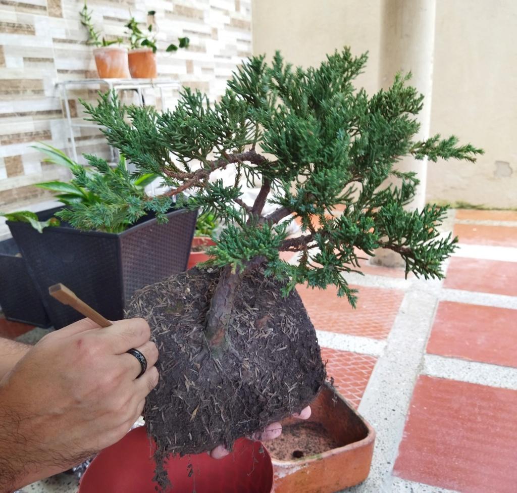 Quien sería tan amable de ayudar a alguien nuevo en este hermoso mundo del bonsai? - Warrod -  Img_2015
