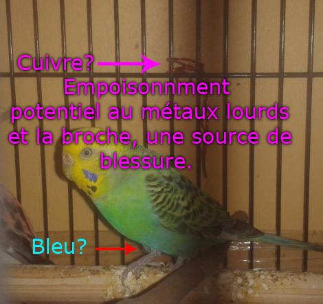 quel petit au nid ? 2013-011