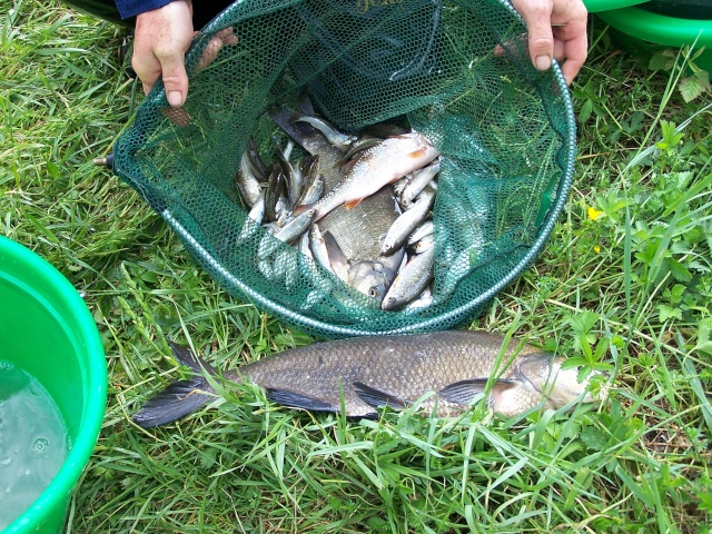 Partie de pêche sur canal de la Marne à la Saône (Riaucourt) Peche_12