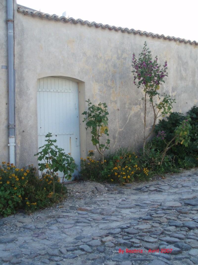 Île de Ré, Charentes-Maritimes, France Rue_st10