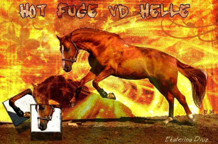 BOX DE HOT FUGE VD HELLE Hot_fu10