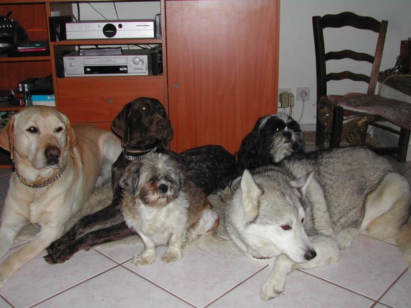 Délyna Husky Femelle 7mois Asso Nunavik (91) adoptee - Page 2 Dscn1010