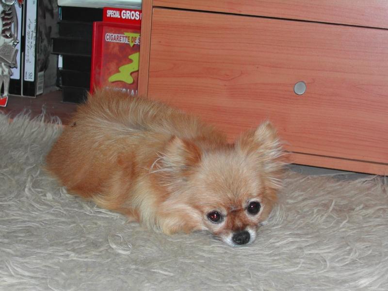 Délyna Husky Femelle 7mois Asso Nunavik (91) adoptee - Page 2 Les_mi10