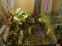 mon terrarium Dsc01011