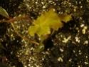 mon terrarium Dsc01013