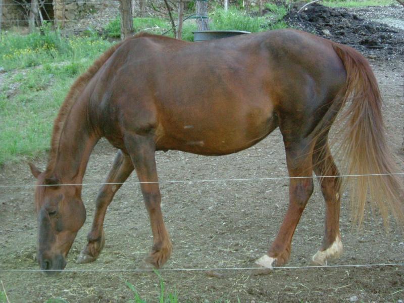 Le 2ème mini Ciaràn en route 2007-025