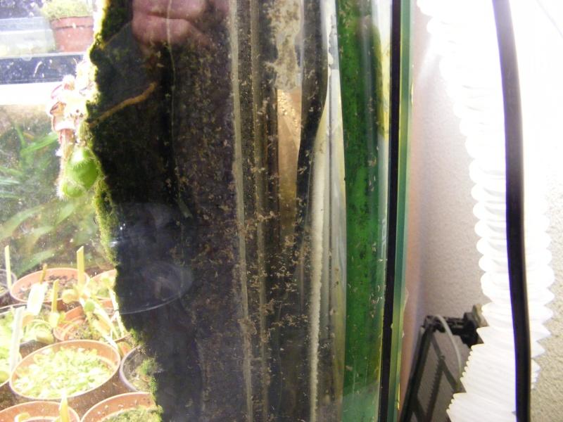 Recherche drosera 2010_012